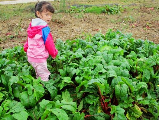 海珠儿童公园开心农场认养开始啦