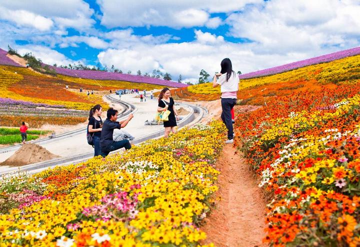春天那么美     玛琪雅朵花海以其富有浓郁欧洲风情