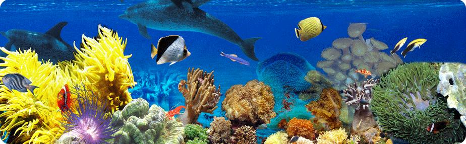 收纳世界的水下奇迹——北海海底世界  北海海底世界座落于广西省南宁