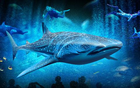 各种珍稀海底动物在身边畅游,不可思议的美丽海底画面让宾客为之倾倒
